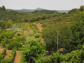 The Benzinger Family Winery is a diversified vineyard in Sonoma County. (Photo: Corey Luthringer)