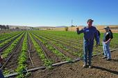 Organic farmer Phil Foster stands in front of a field with cover crops planted in strips at the top of the planting bed.