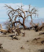 Invasive species threaten California's landscapes.
