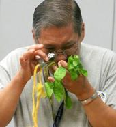 Master Gardener looking through a hand lens to identify a pest problem on plant leaves. (Photo: Marcy Sousa, UCCE San Joaquin)