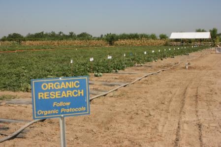 Ten acres at Kearney are set aside for organic research.