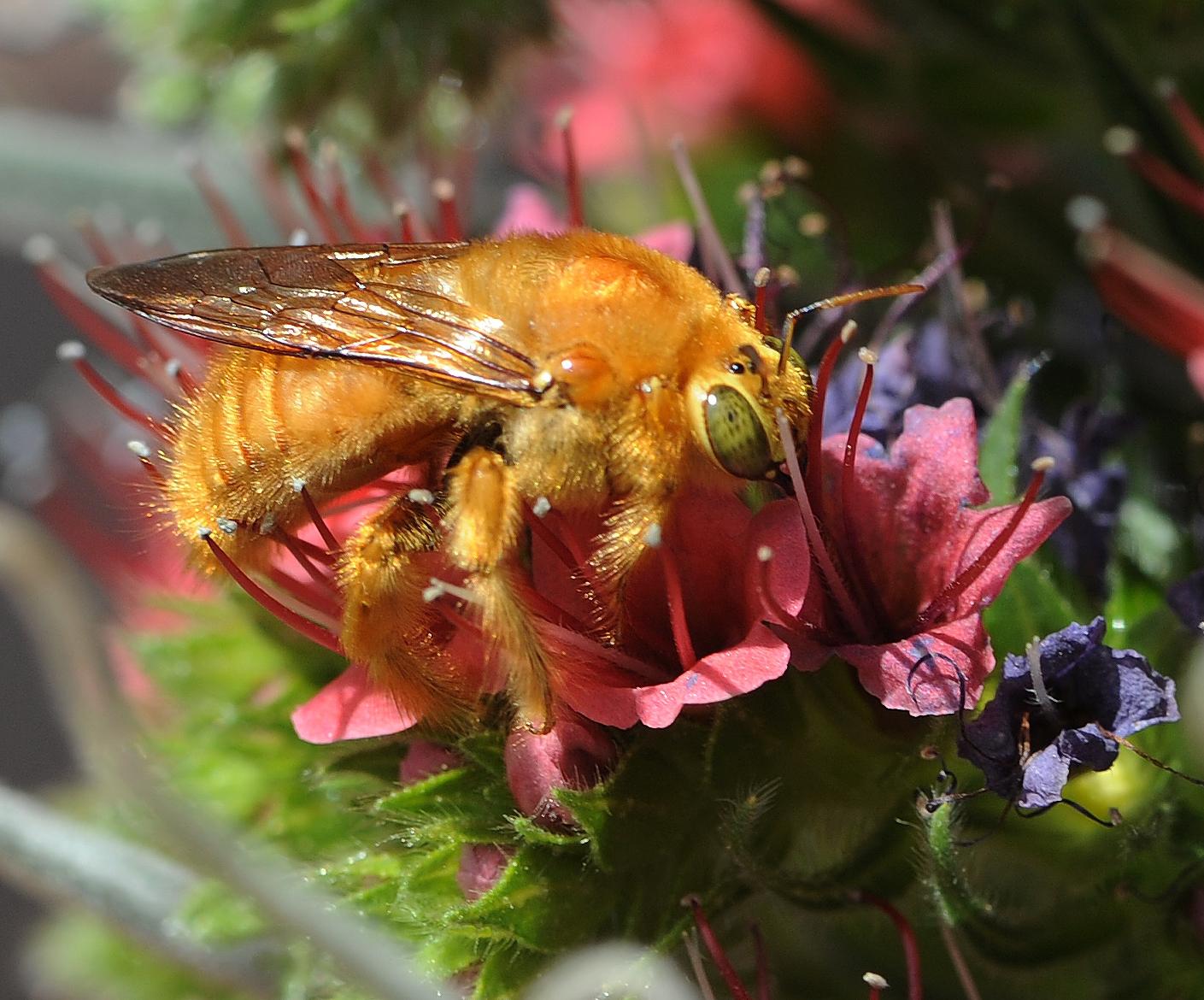 Carpenter bees, bee-ing important pollinators - Green Blog
