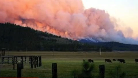 The Moonlight Fire of 2007, which burned about 70,000 acres, is an example of a high-intensity fire.
