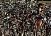 Bicycles on the UC Davis campus.
