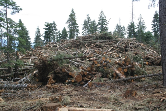 Slash pile – Tahoe National Forest, Last Chance project.