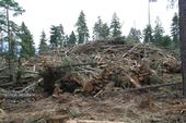 Slash pile in Tahoe National Forest, Last Chance project.