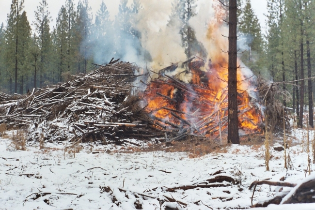 Slash pile under a controlled burn.