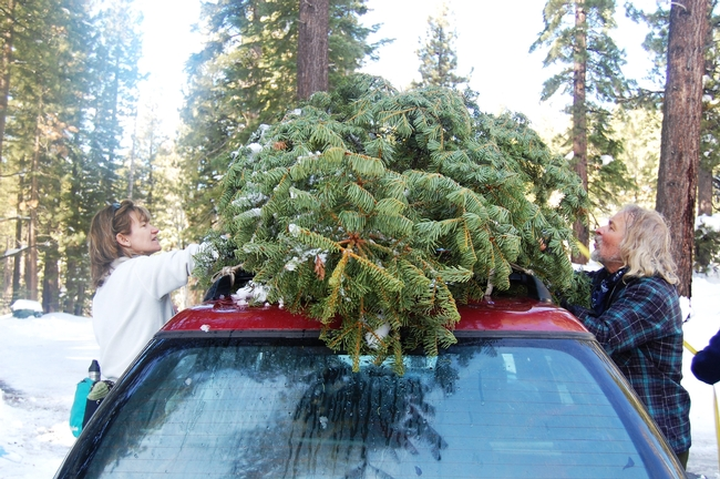 Securing Christmas tree to the car