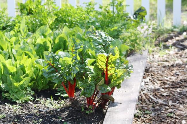 Photo Credit: Jennifer Baumbach, UCCE Master Gardener Coordinator, Solano County)