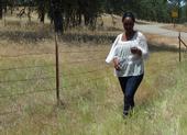 Fadzayi Mashiri walks through a patch of medusahead in Mariposa County.