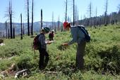 Postdoctoral researcher Jens Stevens (right) inspects an untreated forest after a wildfire.