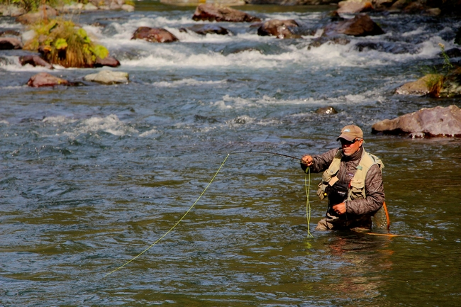 Jeff Thompson, California Trout's executive director, does a little fly fishing on the McCloud River. He played a crucial role in establishing the organization's partnership with UC Davis to ensure that research and outreach on wild trout, salmon, and steelhead will continue after Professor Peter Moyle retires.