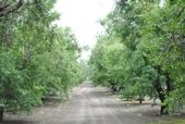 Nutrient management in almond orchards will be discussed in November.