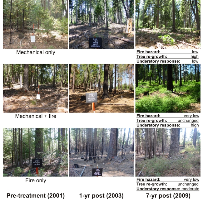 Repeat photographs taken from a field plot in each of the three active treatment types: (A) mechanical only, (B) mechanical-plus-fire, (C) and fire only.