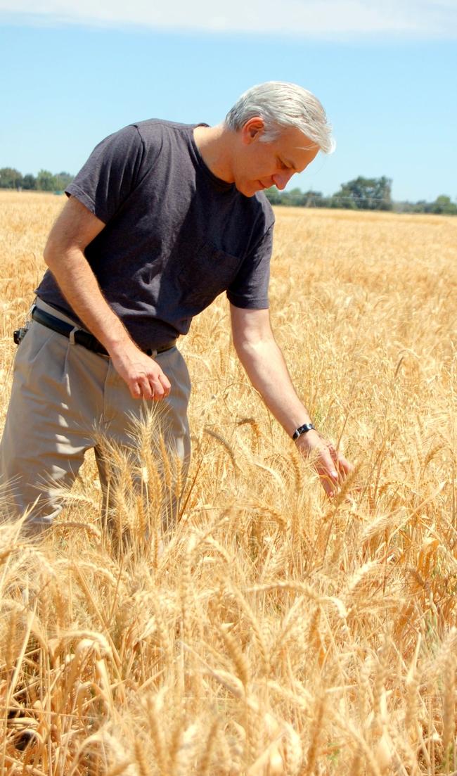 UC Davis wheat breeder, Jorge Dubcovsky.