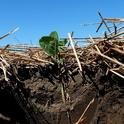 Conservation agriculture practices, such as reduced tillage and cover cropping, have proven soil building benefits. (Photo: NRCS)