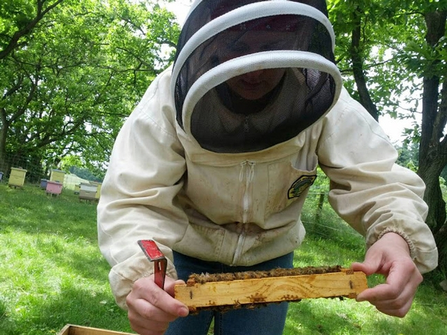 Elina Lastro Niño working a hive. (Photo courtesy of Elina Lastro Niño)