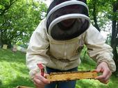 Elina Lastro Niño working a hive. (Photo courtesy of Elina Lastro Niño)