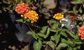 UC ANR expert says plant nurseries have a need for neonicotinoid pesticides.