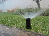 It's best to irrigate early in the morning. (Photo: Ricardo Bernardo)