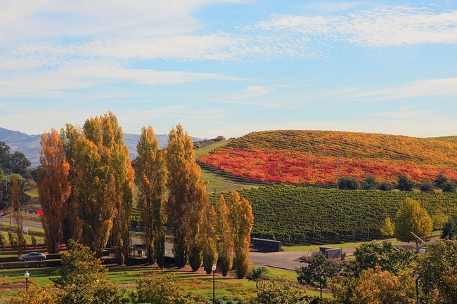 Fall in Napa Valley. (Photo: Wikimedia Commons)