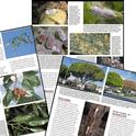 A sampling of pages in Pests of Landscape Trees and Shrubs.