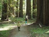 One tour will visit the City of Arcata Community Forest. Community members use the actively managed forest on a daily basis.