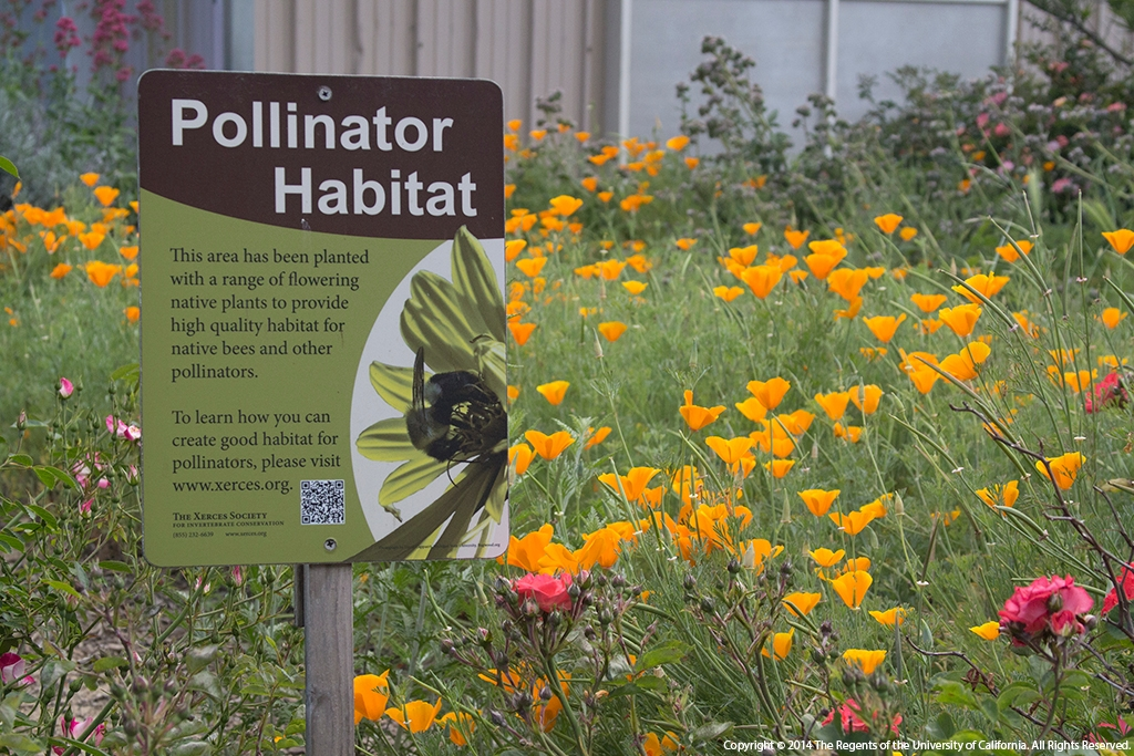 Twelve rules of thumb for creating a bee-friendly home ... on native plant garden, native wildflower garden, native perennial garden, native bee habitat,