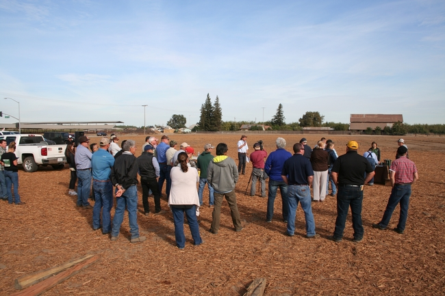 Farmers and industry professionals gather at a UC Cooperative Extension field day at the Tellarico Farm in Manteca, Calif.
