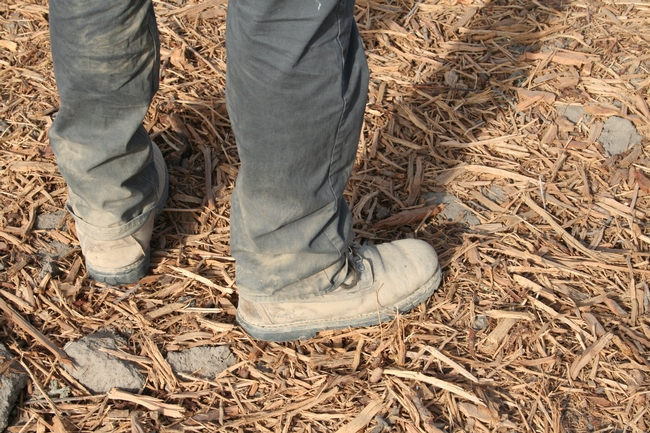 Note the size of ground-up almond trees compared to the boots on the ground.