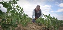 Jesse Sanchez, manager of Sano Farms in Firebaugh. (Photo: USDA NRCS) for Green Blog Blog