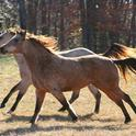 Wild horses are beautiful, but present land management challenges.
