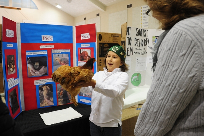 Jarred Burkett, 10, of the Sherwood Forest 4-H Club, Vallejo, talks about his chicken, Frostbite, at the Solano County 4-H Presentation Day, held recently in Dixon. (Photo by Kathy Keatley Garvey)