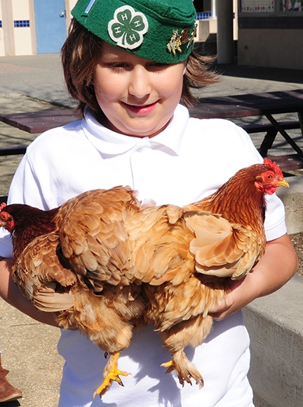 Jarred Burkett holds Twilight and Frostbite, chocolate red cochin bantams. (Photo by Kathy Keatley Garvey)