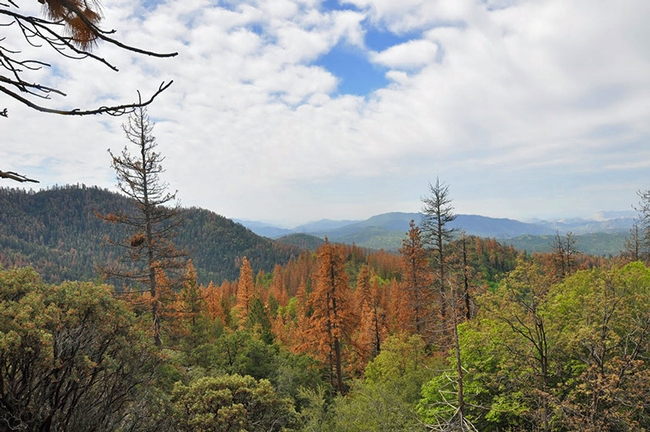 Dead trees in the Sequoia National Forest. (Photo: U.S. Forest Service)
