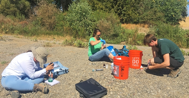 Sacramento State geology professor Amelia Vankeuren and graduate students collect samples at the American River.