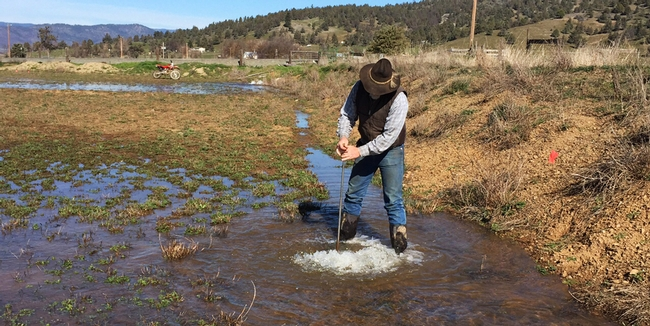 Farmer Jim Morris on an alfalfa field being flooded for groundwater recharge.
