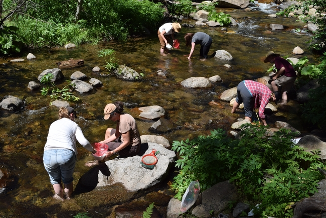 Teachers wade into a stream to learn about aquatic life.