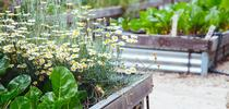 UC Master Gardener demonstration gardens offer knowledge and examples on how to grow a variety of plants in your garden. Visit one today and be inspired! for Green Blog Blog