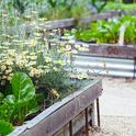 UC Master Gardener demonstration gardens offer knowledge and examples on how to grow a variety of plants in your garden. Visit one today and be inspired!