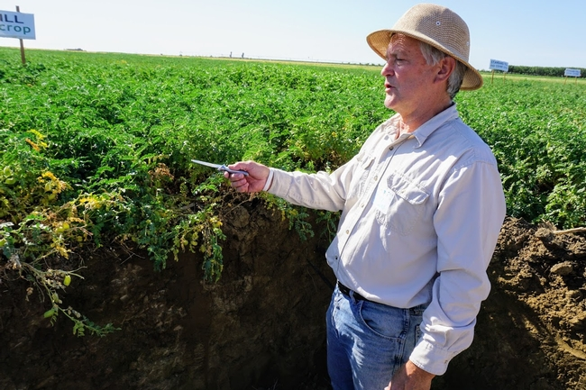 Randall Southard, standing in a bulldozed pit, shows the characteristics of soil beneath conservation agriculture trials at the West Side REC.