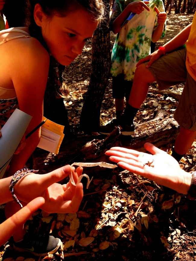 Campers enjoy a woodland hike and discover slender salamanders and a discarded lizard skin.