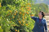 UC Cooperative Extension specialist Beth Grafton-Cardwell is one of two UC ANR scientists who have developed the Science for Citrus Health website.