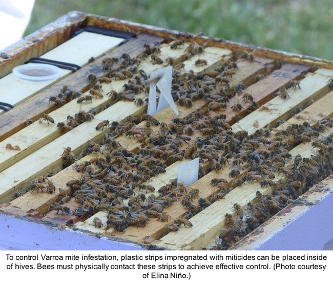 Plastic strips with miticides to contol Varroa mite infestations.