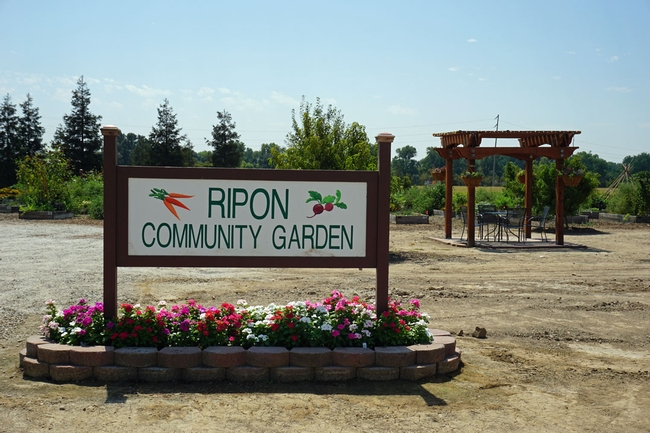 The Ripon Community Garden allows local families to grow food, and allocates four beds to grow fresh vegetables to distribute to local senior citizens.