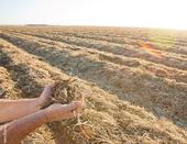 Management practices, like those used on the no-till field shown here, can increase total soil carbon.