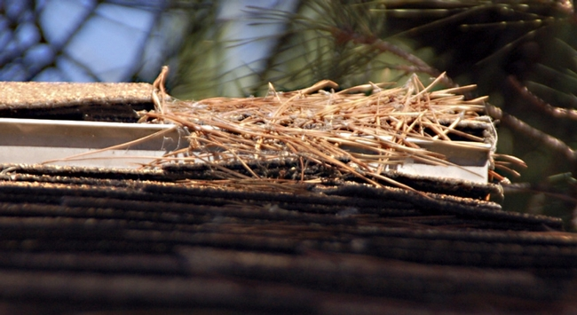 Embers can ignite dry plant material like pine needles and create more embers that may enter homes through vents.