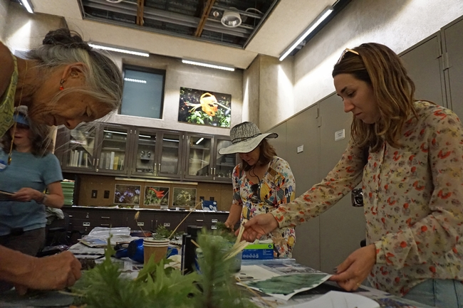 UC California Naturalist director Adina Merenlender, left, and Marisa Rodriguez, CalNat Education Specialist, paint on the cyanotype solution in a darkened room.