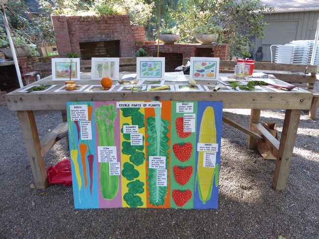 Different edible parts of plants are on display (roots, stems, flowers, leaves and seeds) for students to have hands-on learning in the garden. (Photo: UC Master Gardener Program Marin County) for Green Blog Blog