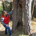 Kate Wilkin inspects a ponderosa pine on her property with an old fire scar, undeniable evidence that fire has swept through her neighborhood in the past.